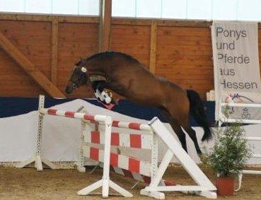 pferd camburg kaufen
