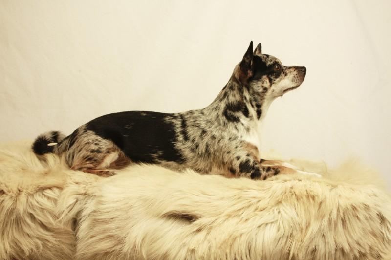 wie bringe ich meinen hund dazu mich zu ficken. Black Bedroom Furniture Sets. Home Design Ideas